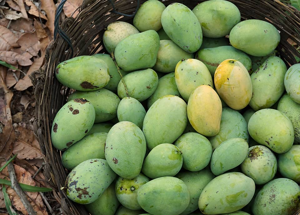 Five reasons we love Organic Mango!